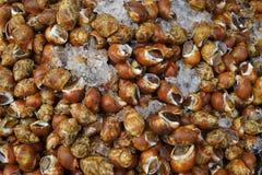 Muchos crustáceos manchados crudos de Babilonia para vender Fotografía de archivo libre de regalías
