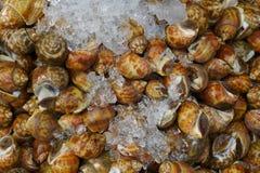 Muchos crustáceos manchados crudos de Babilonia para vender Foto de archivo libre de regalías