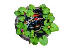 Muchos de Koi pescan la natación en un tarro de tierra del agua fotografía de archivo