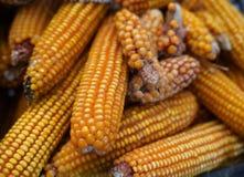 Muchos de secan mazorcas de maíz amarillas fotografía de archivo