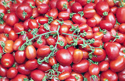Muchos de tomates rojos maduros jugosos Imagen de archivo