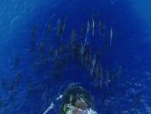 Muchos delfínes que saltan delante de la nave almacen de video