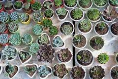 Muchos diversos cactus en potes Fotografía de archivo