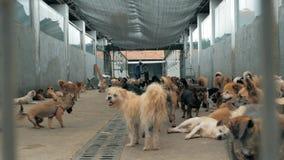Muchos diversos perros grandes detrás de las cercas Perros en un refugio o un cuarto de ni?os animal Refugio para el concepto de  metrajes