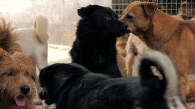 Muchos diversos perros grandes detrás de las cercas Perros en un refugio o un cuarto de ni?os animal Refugio para el concepto de  almacen de metraje de vídeo