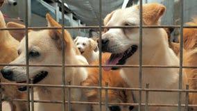 Muchos diversos perros grandes están buscando la atención detrás de las cercas Perros en un refugio o un cuarto de ni?os animal A metrajes