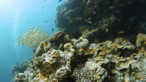 Muchos grupos de los otros pescados y arrecife de coral almacen de video