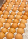 Muchos huevos marrones en cajas en cierre de la tienda para arriba Imagen de archivo