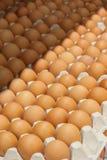 Muchos huevos marrones en rectángulos Foto de archivo libre de regalías