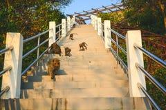 Muchos monos son walkng abajo de los staits foto de archivo