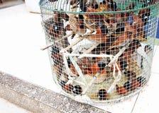 Muchos pájaros prisioneros de la crueldad en poca jaula Fotografía de archivo