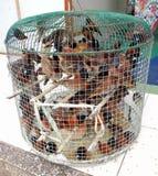 Muchos pájaros prisioneros de la crueldad en poca jaula Imagenes de archivo