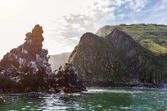 Muchos pájaros que se sientan en una piedra en el mar fotografía de archivo