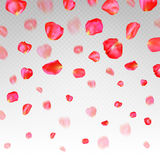 Muchos pétalos color de rosa rojos que caen en fondo transparente ilustración del vector