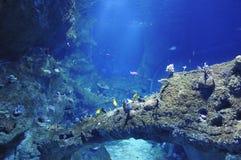 Muchos peces de mar en un acuario grande Foto de archivo libre de regalías
