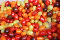 Muchos pequeños tomates de colores diversos y extraños, amarillo, rojo, marrón y anaranjado Genético modificado fotografía de archivo libre de regalías