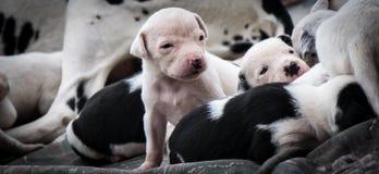 Muchos perritos Imagen de archivo