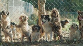 Muchos perros de diversas razas miran a través de la red en un refugio o un cuarto de niños almacen de video
