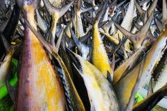 Muchos pescados en el mercado Imagen de archivo