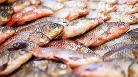 Muchos pescados en el supermercado contrario metrajes