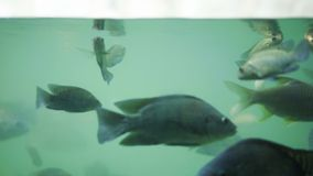 Muchos pescados están nadando en agua almacen de video