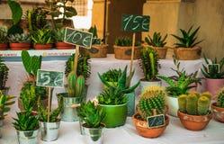 Muchos, poco, cactus diverso, lindo, mercado en Italia, Em de Reggio Foto de archivo
