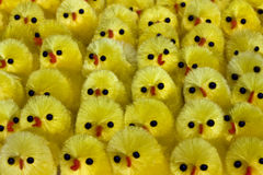 Muchos polluelos foto de archivo