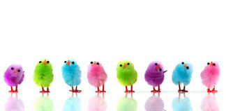Muchos polluelos de pascua Imagenes de archivo