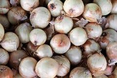 Muchos sanos vegetales orgánicos de las cebollas blancas Fotos de archivo libres de regalías