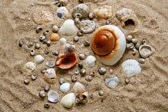 Muchos shelles imágenes de archivo libres de regalías
