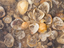 Muchos shelles fotografía de archivo libre de regalías