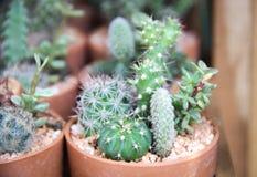 Muchos tipo de cactus crecen en potes Foto de archivo libre de regalías