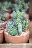 Muchos tipo de cactus crecen en potes Fotos de archivo
