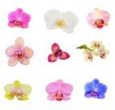 Muchos tipos, colección de flores de las orquídeas Imagen de archivo libre de regalías