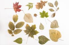 Muchos tipos de hojas secadas. Foto de archivo