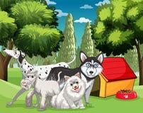 Muchos tipos de perros en el parque Foto de archivo libre de regalías