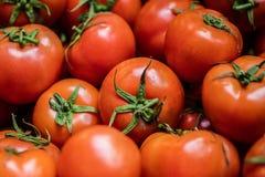 Muchos tomates foto de archivo libre de regalías