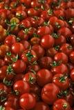 Muchos tomates de cereza rojos Imagenes de archivo