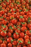 Muchos tomates de cereza rojos Imagen de archivo