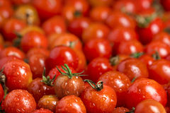 Muchos tomates de cereza rojos Fotografía de archivo libre de regalías