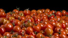 Muchos tomates de cereza rojos Foto de archivo