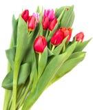 Muchos tulipanes brillantes aislados en blanco Imágenes de archivo libres de regalías