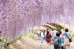 Muchos turistas durante la glicinia florecen festival en Kawachi Fujien, Fukuoka, Japón fotografía de archivo
