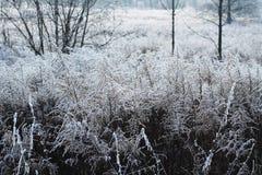 Muchos woundworts congelados Foto de archivo libre de regalías