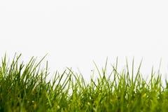muchy trawy. Obraz Stock