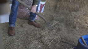 Mucking out the stables stock video footage