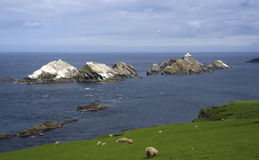 Muckle Flugga, northern most point of the British Isles. View of Muckle Flugga lighthouse seen from Unst, Shetland Islands with to the left one of the huge royalty free stock photos