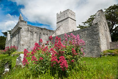 Muckross Abbey in county kerry, Ireland. Grounds of Muckross Abbey in county kerry, Ireland Royalty Free Stock Photo