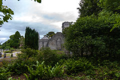 Muckross Abbey Killarney Royalty Free Stock Photos