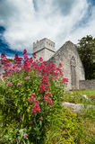 Muckross Abbey wild flowers, County Kerry Stock Images